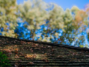 Cedar roof moss cleaning