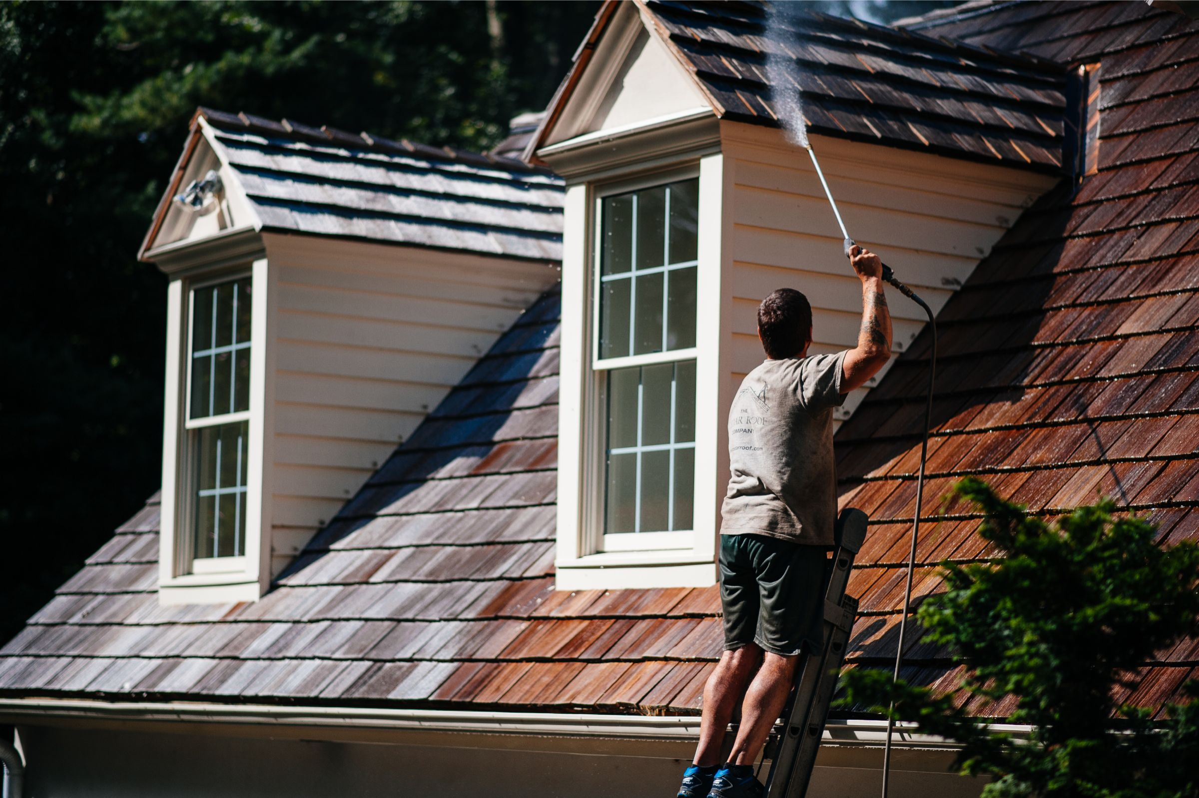 What To Do About Moss On Your Cedar Roof Cedar Roof
